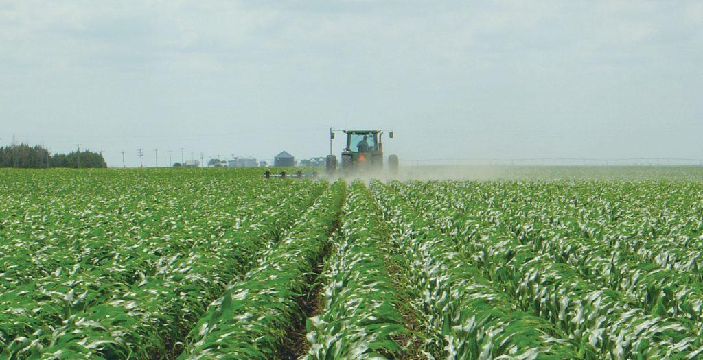 Organic farming dwarfs GM crops in Europe as public rejection hits biotech firms