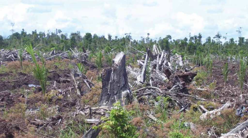 Biofuels limit not enough to prevent hunger and deforestation