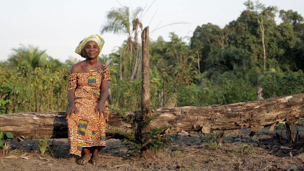 Help stop land-grabbing for palm oil in Liberia