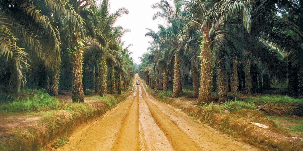 Global call for EU to halt devastating biofuels
