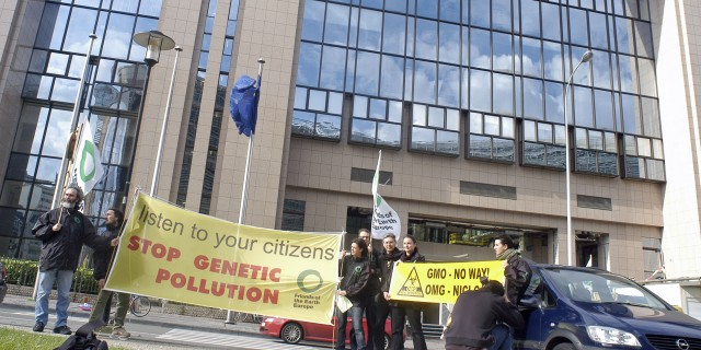 EU food agency re-checks safety of biotech crops following new research