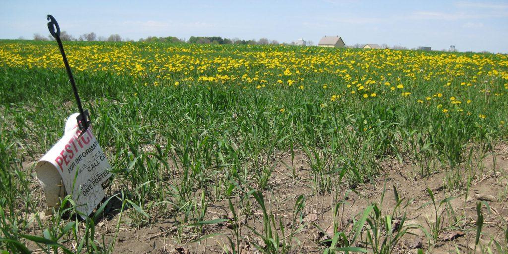 Broken promises on GM food