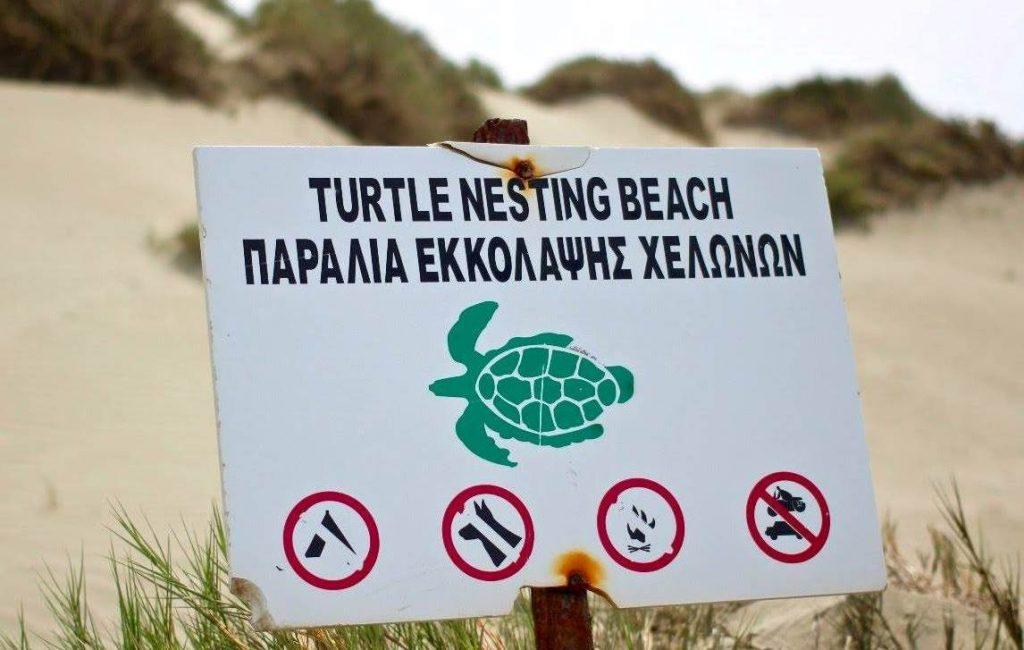 EU's death sentence for endangered Cyprus turtles