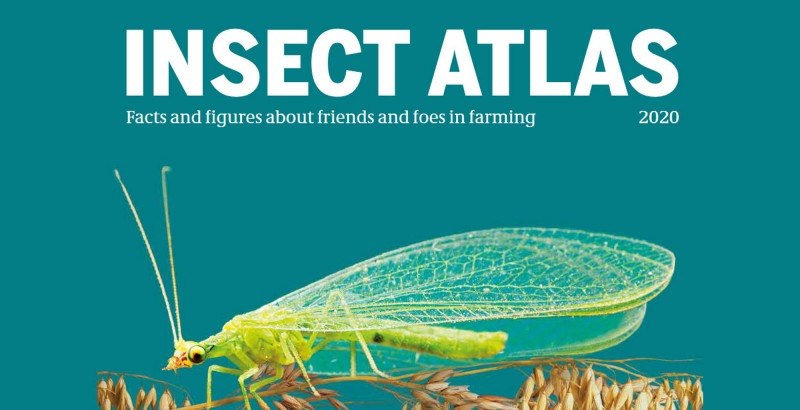 Global insect collapse driven by industrial farming, says new Insect Atlas