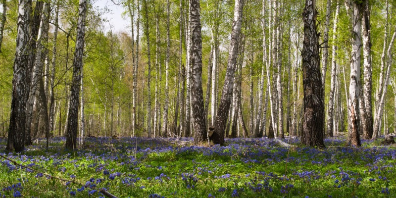 EU member states endorse new plan to address biodiversity crisis